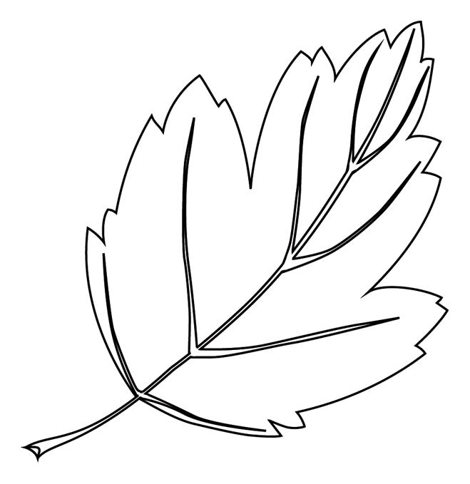 comment dessiner une feuille d arbre