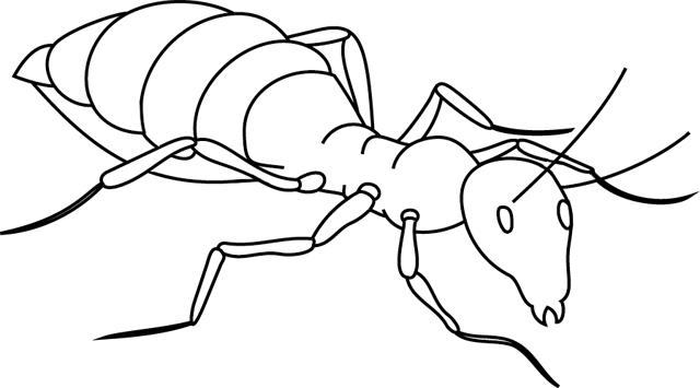 Dessin à imprimer puis à colorier ou peindre une fourmi