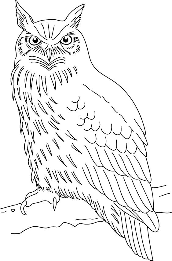... ici : Accueil Coloriages Oiseaux Coloriage à imprimer : un hibou