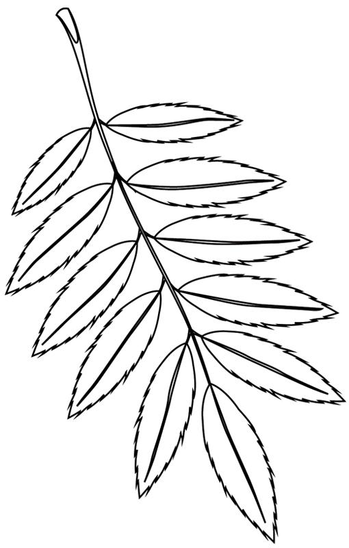 coloriage imprimer feuille darbre - Dessin De Feuille