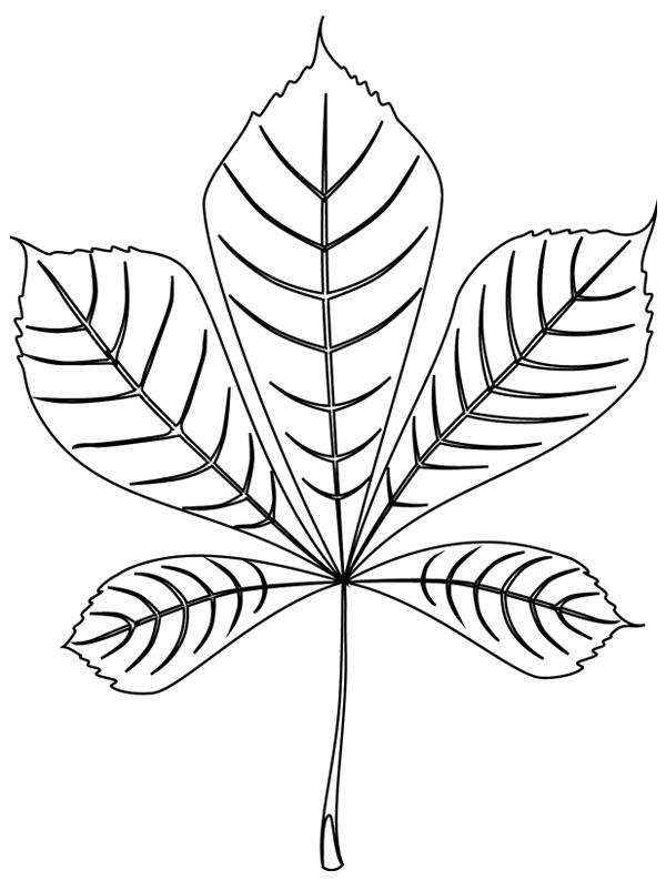 coloriage imprimer une feuille de marronnier - Dessin De Feuille