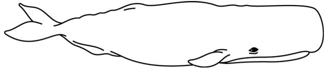 Coloriage à Imprimer Une Baleine Turbulus Jeux Pour Enfants
