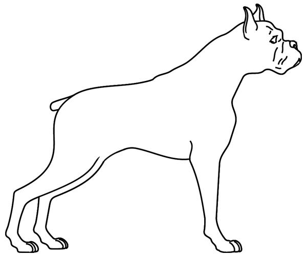 Coloriage imprimer un chien le boxer turbulus jeux - Coloriage de chien boxer ...