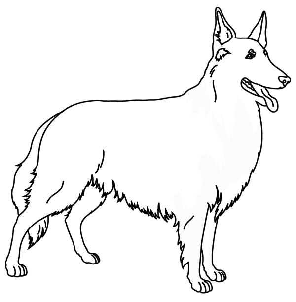 Coloriage chien Colley