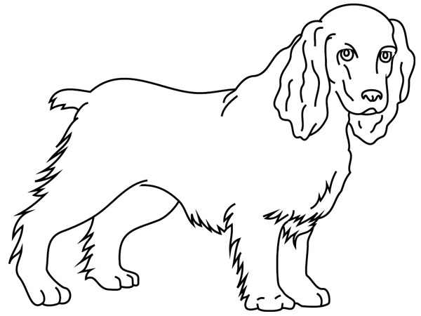 Coloriage imprimer un chien le cocker turbulus - Dessin de cocker ...