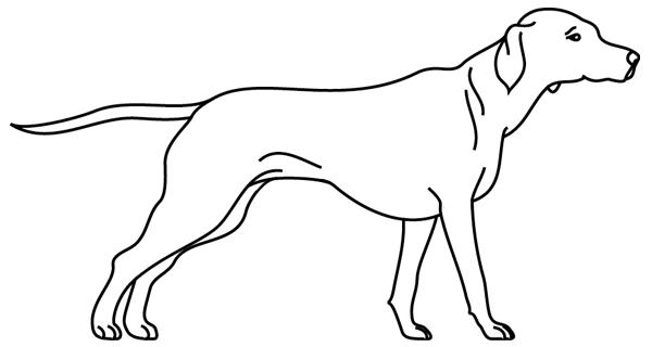 Coloriage imprimer un chien dessin 6 turbulus jeux - Dessin d un chien ...