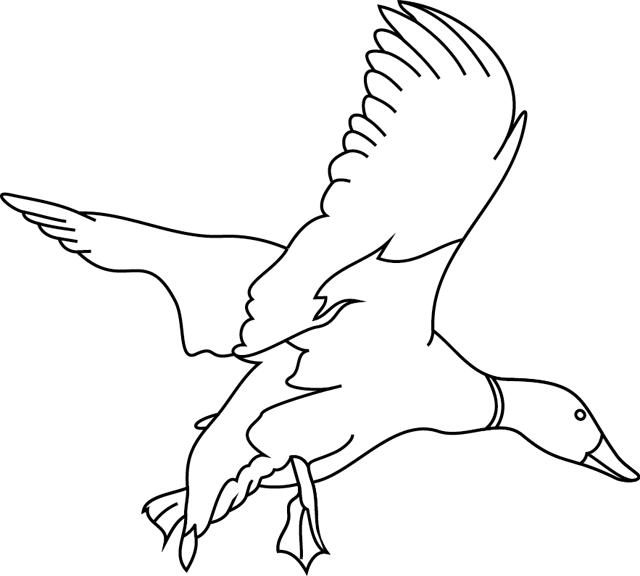 Coloriage imprimer un canard colvert turbulus jeux - Image canard a imprimer ...