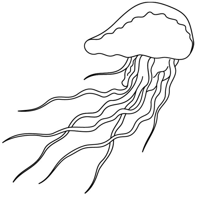 Coloriage à imprimer : une méduse - Turbulus, jeux pour ...