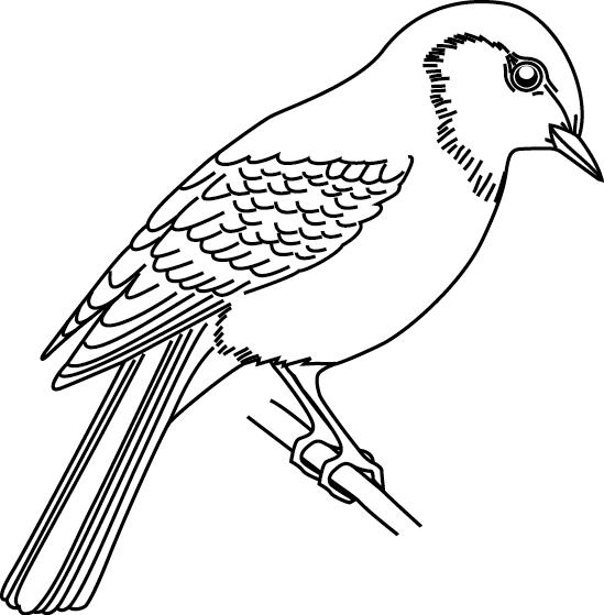 Coloriage imprimer un moineau - Dessin d oiseau a imprimer ...