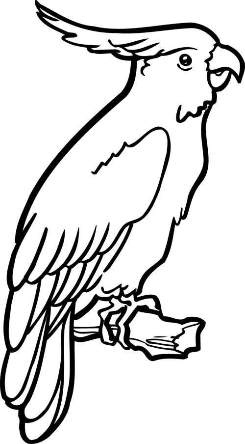 Coloriage imprimer un perroquet turbulus jeux pour - Perroquet dessin ...