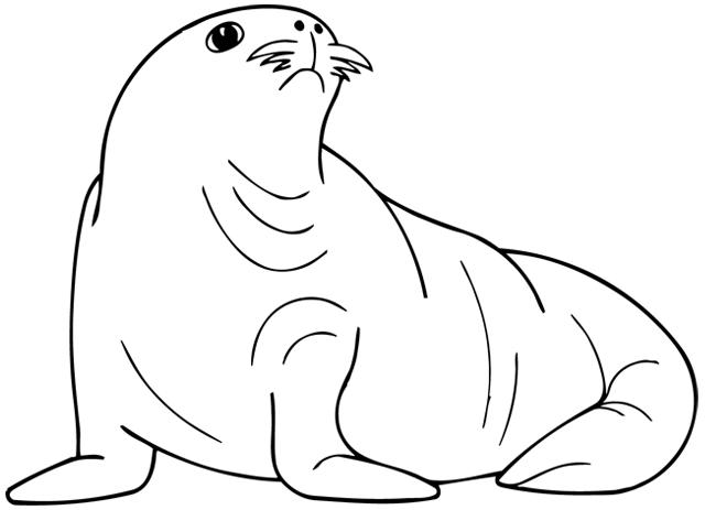 Dessin à colorier : un phoque - Turbulus, jeux pour enfants
