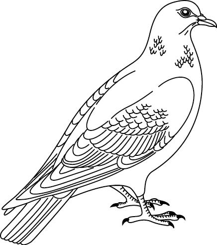 Coloriage Le Chien Et Le Pigeon.Coloriage A Imprimer Un Pigeon Turbulus Jeux Pour Enfants