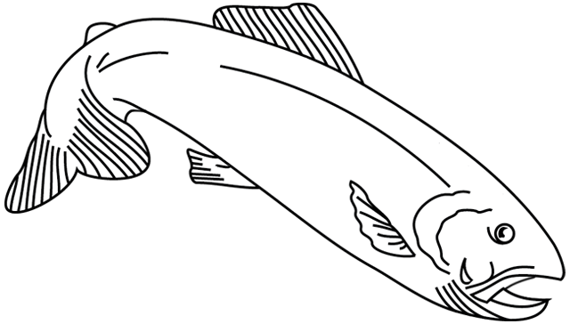 Coloriage imprimer un poisson 5 turbulus jeux - Image de poisson a imprimer ...