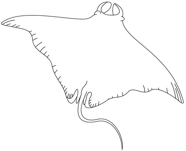 Coloriage imprimer une raie manta turbulus jeux pour enfants - Dessin raie manta ...