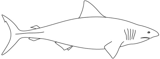 Coloriage imprimer un requin turbulus jeux pour enfants - Coloriage requin a imprimer ...