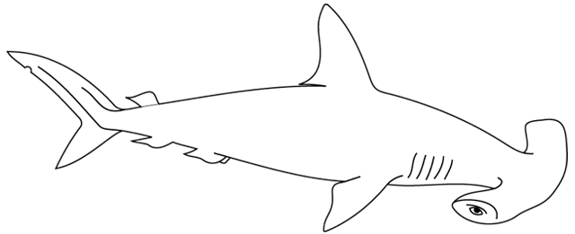 Coloriage imprimer un requin marteau turbulus jeux - Coloriage requin blanc ...