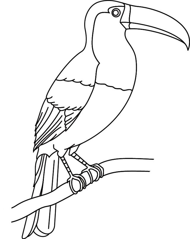 Coloriage imprimer un toucan turbulus jeux pour enfants - Coloriage toucan a imprimer ...
