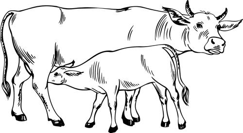 Coloriage à imprimer, une vache et son veau - Turbulus ...